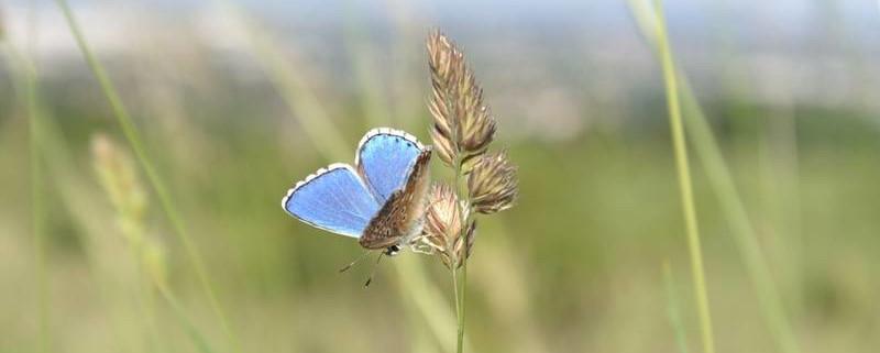 Wiese mit Schmetterling