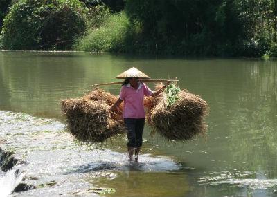 Reisbäuerin in China